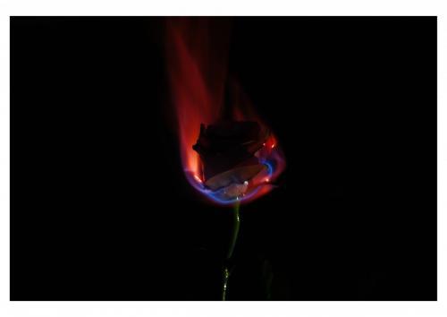 A3 fire flower (1)